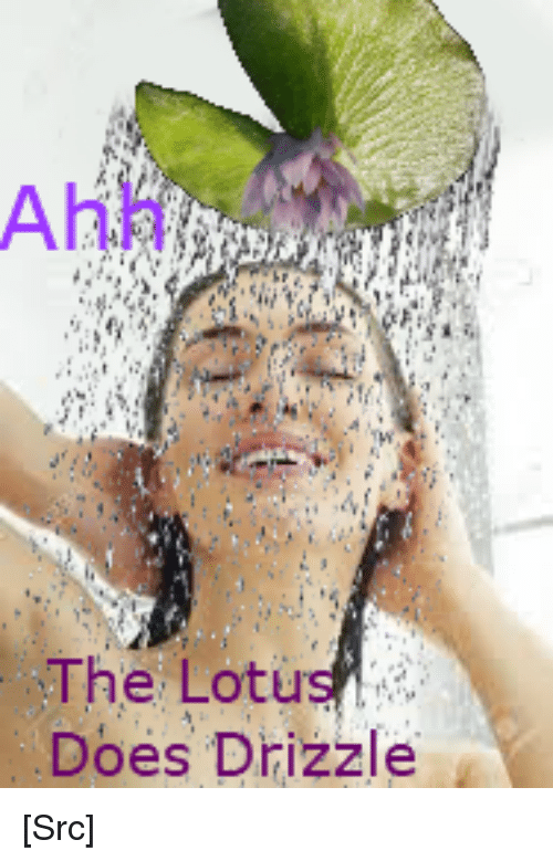 Reddit, Lotus, and Nature: Ahh  The Lotus  Does Drizzle [Src]