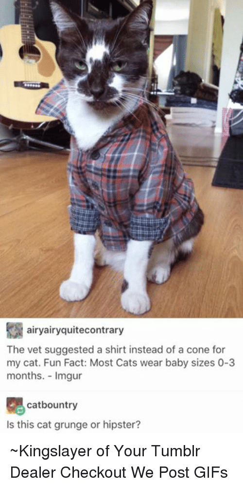imgure: airyairyquitecontrary  The vet suggested a shirt instead of a cone for  my cat. Fun Fact: Most Cats wear baby sizes 0-3  months. Imgur  catbountry  Is this cat grunge or hipster? ~Kingslayer of Your Tumblr Dealer  Checkout We Post GIFs