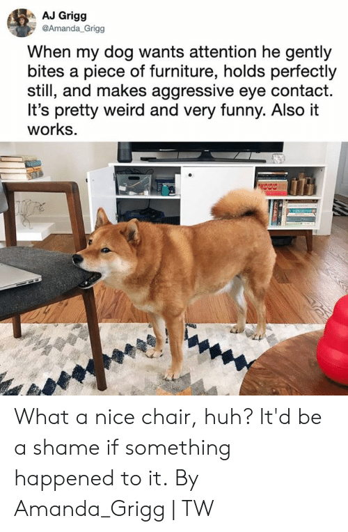 very funny: AJ Grigg  @Amanda_Grigg  When my dog wants attention he gently  bites a piece of furniture, holds perfectly  still, and makes aggressive eye contact.  It's pretty weird and very funny. Also it  works. What a nice chair, huh? It'd be a shame if something happened to it.  By Amanda_Grigg | TW