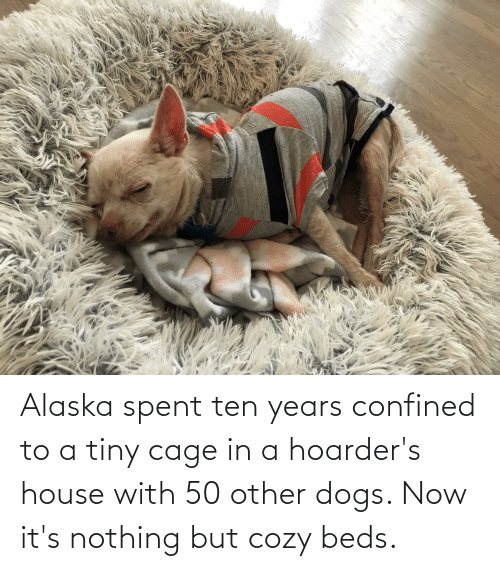 Dogs: Alaska spent ten years confined to a tiny cage in a hoarder's house with 50 other dogs. Now it's nothing but cozy beds.