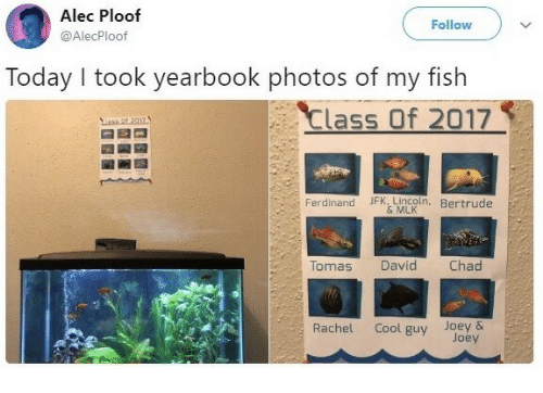 My Fish: Alec Ploof  @AlecPloof  Follow  Today I took yearbook photos of my fish  Class Of 2017  Ferdinand JFK. LIncoln, Bertrude  & MLK  Tomas  David  Chad  Rachel Cool guy Joey &