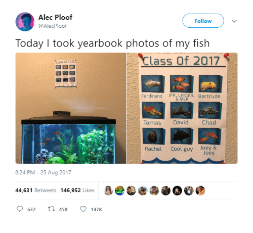 My Fish: Alec Ploof  @AlecPloof  Follow  Today I took yearbook photos of my fish  Class Of 2017  Ferdinand JFK Lmcoln, Bertrude  Tomas David  Chad  Rachel Cool guy Joey &  Joey  8:24 PM-25 Aug 2017  44,631 Retweets 146,952 Likes  O 632 t1 45K 147K