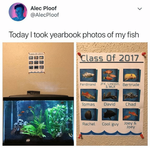 My Fish: Alec Ploof  @AlecPloof  Today I took yearbook photos of my fish  Class of 2017  Ferdinand JFK, Lincoln. Bertrude  & MLK  Tomas David Chad  Rachel Cool guy Joey&  Joey