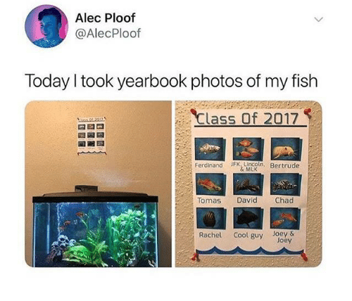 My Fish: Alec Ploof  @AlecPloof  Today I took yearbook photos of my fish  Class Of 2017  Ferdinand JFK, Lincoln, Bertrude  & MLK  Tomas David Chad  Rachel Cool guy Joey  Joey
