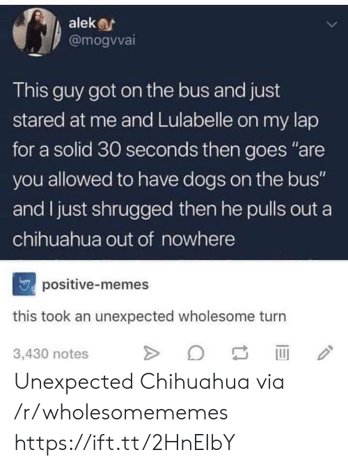 "Chihuahua, Dogs, and Memes: alek  @mogvvai  This guy got on the bus and just  stared at me and Lulabelle on my lap  for a solid 30 seconds then goes ""are  you allowed to have dogs on the bus""  and I just shrugged then he pulls out a  chihuahua out of nowhere  positive-memes  this took an unexpected wholesome turn  3,430 notes Unexpected Chihuahua via /r/wholesomememes https://ift.tt/2HnEIbY"