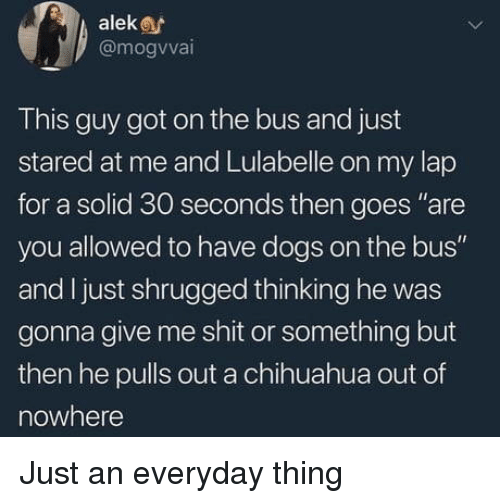 """Chihuahua, Dogs, and Shit: aleke  @mogvvai  This guy got on the bus and just  stared at me and Lulabelle on my lap  for a solid 30 seconds then goes """"are  you allowed to have dogs on the bus""""  and I just shrugged thinking he was  gonna give me shit or something but  then he pulls out a chihuahua out of  nowhere Just an everyday thing"""