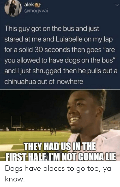 """Chihuahua, Dogs, and Got: alekf  @mogvvai  This guy got on the bus and just  stared at me and Lulabelle on my lap  for a solid 30 seconds then goes """"are  you allowed to have dogs on the bus""""  and I just shrugged then he pulls out a  chihuahua out of nowhere  THEY HAD USIN THE  FIRST HALF I'M NOT GONNA LIE Dogs have places to go too, ya know."""
