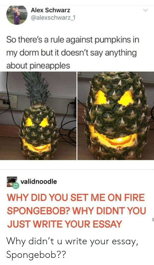 pineapples: Alex Schwarz  @alexschwarz 1  So there's a rule against pumpkins in  my dorm but it doesn't say anything  about pineapples  validnoodle  WHY DID YOU SET ME ON FIRE  SPONGEBOB? WHY DIDNT YOU  JUST WRITE YOUR ESSAY Why didn't u write your essay, Spongebob??