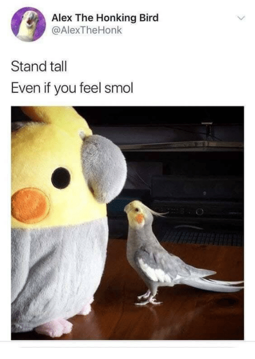 Alex, You, and Stand: Alex The Honking Bird  @AlexTheHonk  Stand tall  Even if you feel smol