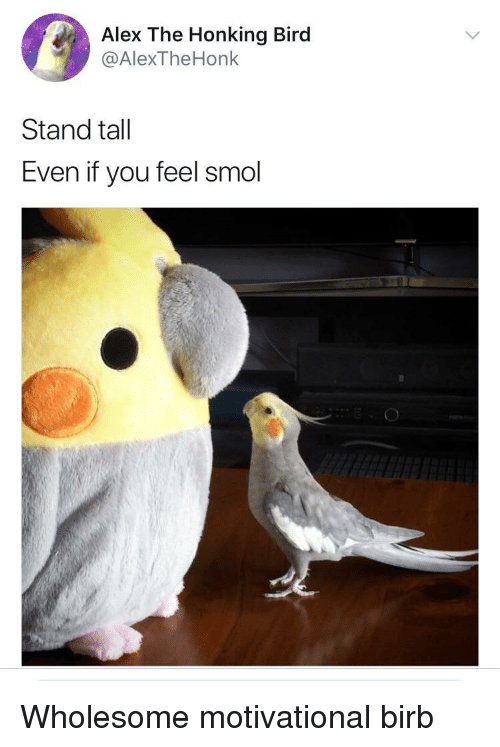 Wholesome, Alex, and You: Alex The Honking Bird  @AlexTheHonk  Stand tall  Even if you feel smol <p>Wholesome motivational birb</p>