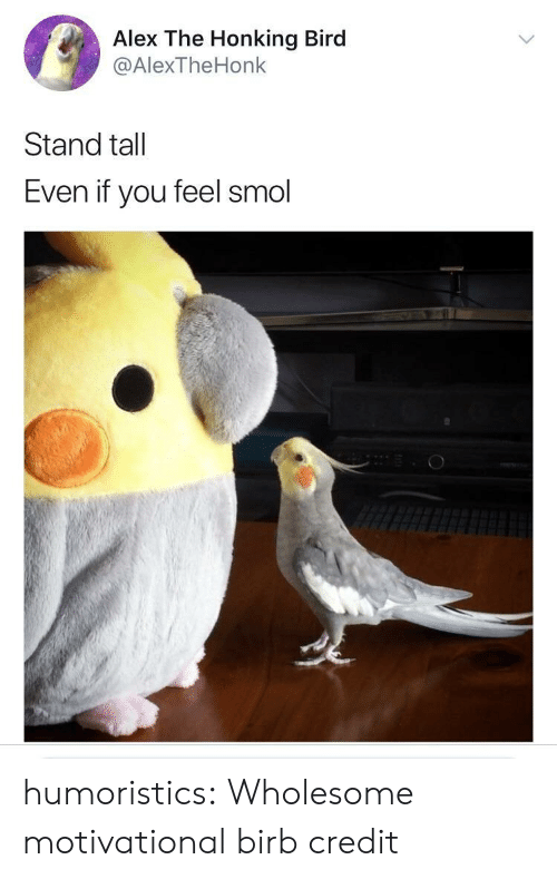 Reddit, Tumblr, and Blog: Alex The Honking Bird  @AlexTheHonk  Stand tall  Even if you feel smol humoristics:  Wholesome motivational birb credit
