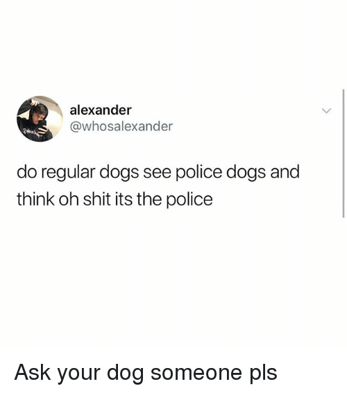 police dogs: alexander  @whosalexander  do regular dogs see police dogs and  think oh shit its the police Ask your dog someone pls