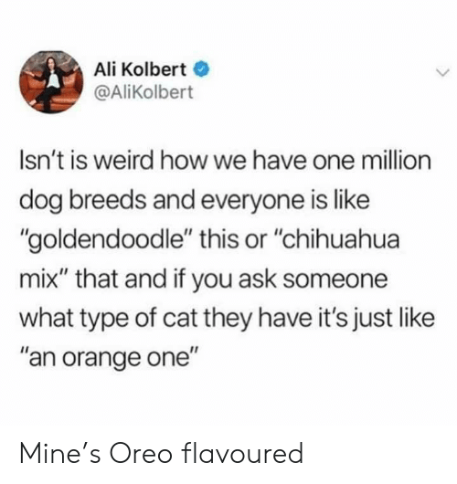 "oreo: Ali Kolbert  @AliKolbert  Isn't is weird how we have one million  dog breeds and everyone is like  ""goldendoodle"" this or ""chihuahua  mix"" that and if you ask someone  what type of cat they have it's just like  ""an orange one"" Mine's Oreo flavoured"