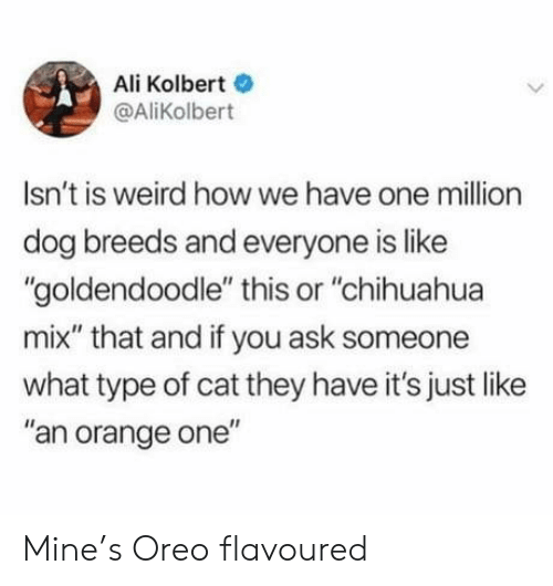 "oreo: Ali Kolbert  @AliKolbert  Isn't is weird howwe have one million  dog breeds and everyone is like  ""goldendoodle"" this or ""chihuahua  mix"" that and if you ask someone  what type of cat they have it's just like  ""an orange one"" Mine's Oreo flavoured"