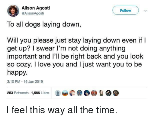 Not Doing Anything: Alison Agosti  @AlisonAgosti  Follow  To all dogs laying down,  Will you please just stay laying down even if l  get up? I swear l'm not doing anything  important and l'll be right back and you look  so cozy. I love you and I just want you to be  happy.  3:10 PM 16 Jan 2019  253 Retweets 1,586 Likes I feel this way all the time.