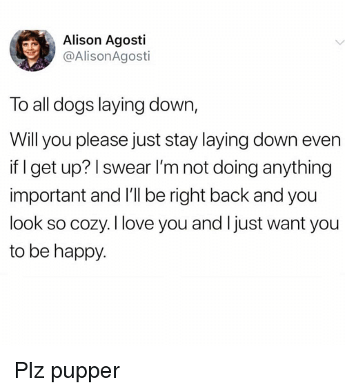 Not Doing Anything: Alison Agosti  @AlisonAgosti  To all dogs laying down,  Will you please just stay laying down even  if I get up? I swear l'm not doing anything  important and l'll be right back and you  look so cozy. I love you and Ijust want you  to be happy Plz pupper