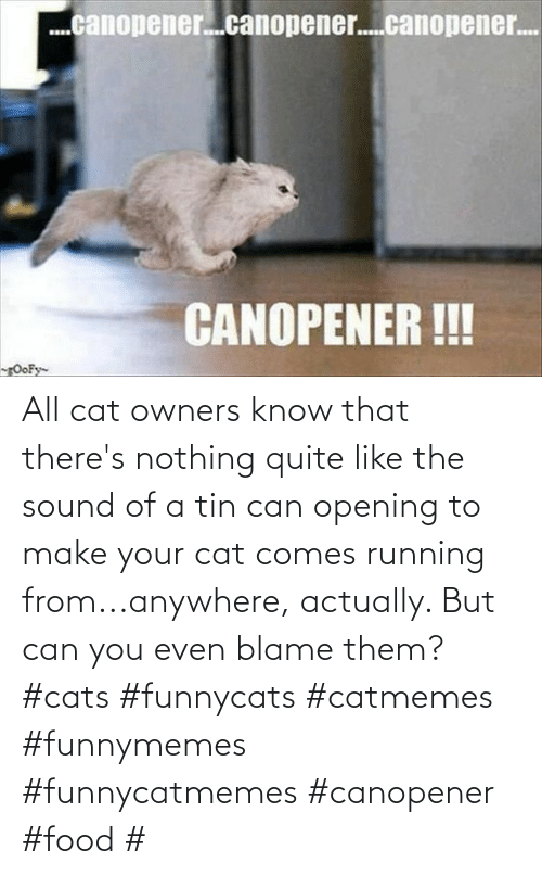 blame: All cat owners know that there's nothing quite like the sound of a tin can opening to make your cat comes running from...anywhere, actually. But can you even blame them?#cats #funnycats #catmemes #funnymemes #funnycatmemes #canopener #food #