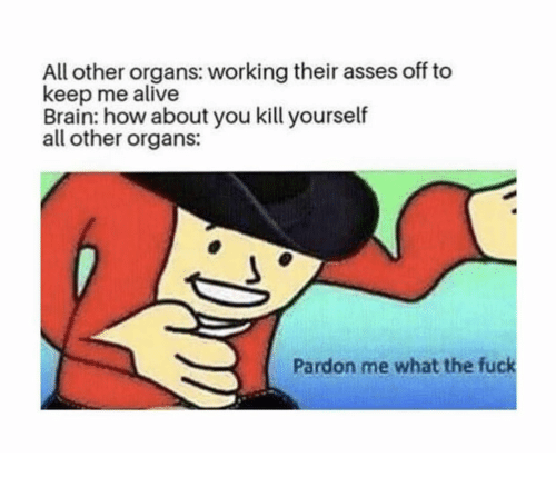 Alive, Brain, and Fuck: All other organs: working their asses off to  keep me alive  Brain: how about you kill yourself  all other organs:  Pardon me what the fuck