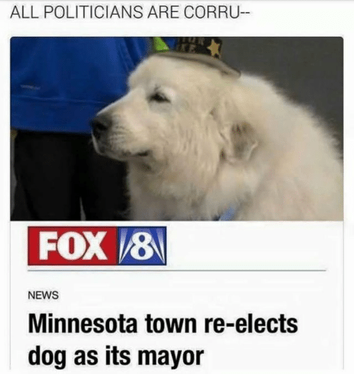 Minnesota: ALL POLITICIANS ARE CORRU  FOX 8  NEWS  Minnesota town re-elects  dog as its mayor