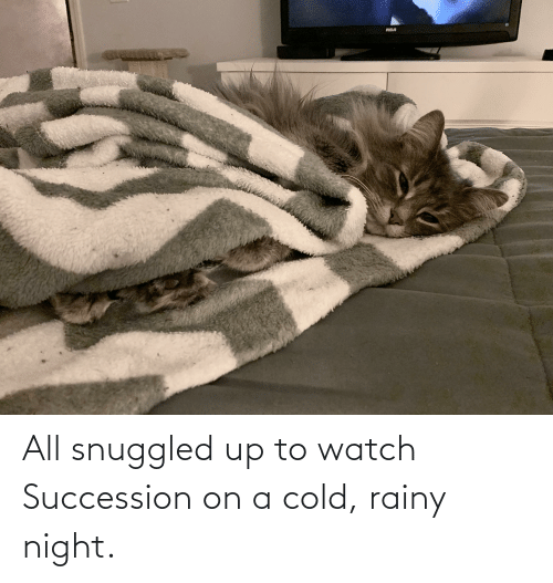 Watch, Cold, and All: All snuggled up to watch Succession on a cold, rainy night.