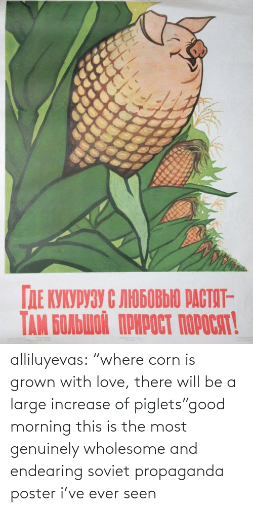"Soviet: alliluyevas:  ""where corn is grown with love, there will be a large increase of piglets""good morning this is the most genuinely wholesome and endearing soviet propaganda poster i've ever seen"