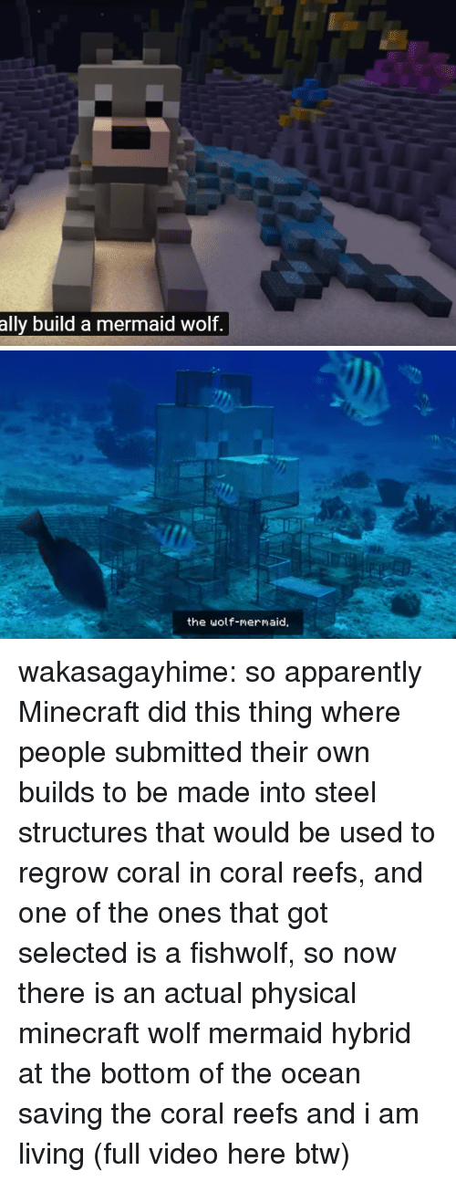 coral: ally build a mermaid wolf.   the wolf-mermaid, wakasagayhime: so apparently Minecraft did this thing where people submitted their own builds to be made into steel structures that would be used to regrow coral in coral reefs, and one of the ones that got selected is a fishwolf, so now there is an actual physical minecraft wolf mermaid hybrid at the bottom of the ocean saving the coral reefs and i am living (full video here btw)