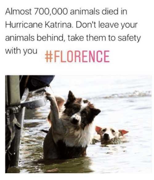 Animals, Hurricane Katrina, and Hurricane: Almost 700,000 animals died in  Hurricane Katrina. Don't leave your  animals behind, take them to safety  with you