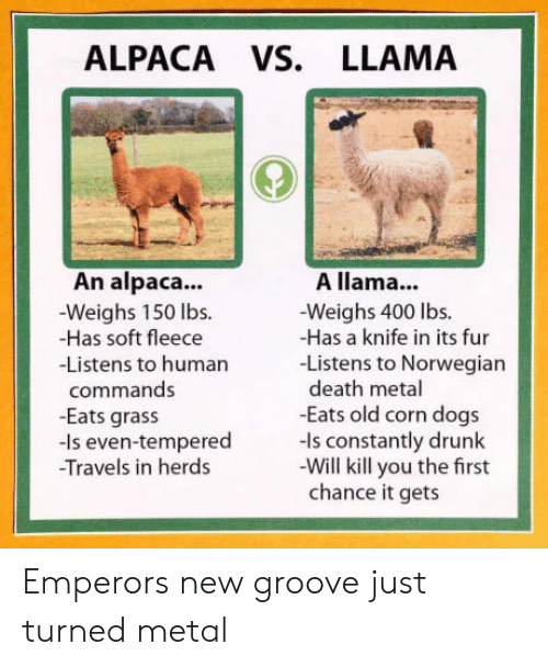 New Groove: ALPACA VS. LLAMA  An alpaca..  -Weighs 150 lbs.  -Has soft fleece  -Listens to humarn  A llama...  -Weighs 400 lbs.  -Has a knife in its fur  -Listens to Norwegian  death metal  -Eats old corn dogs  commands  -Eats grass  -Is even-tempered ls constantly drunk  Travels in herds  -Will kill you the first  chance it gets Emperors new groove just turned metal