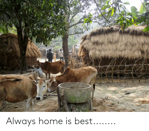 Home Is: Always home is best........