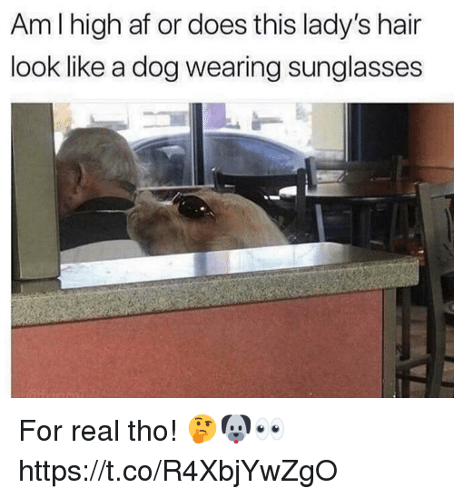 Af, Hair, and Sunglasses: Am I high af or does this lady's hair  look like a dog wearing sunglasses For real tho! 🤔🐶👀 https://t.co/R4XbjYwZgO
