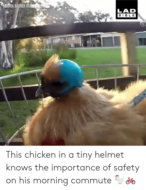 Dank, Bible, and Chicken: AMA ARIMA W  LAD  BIBLE This chicken in a tiny helmet knows the importance of safety on his morning commute 🐓🚲