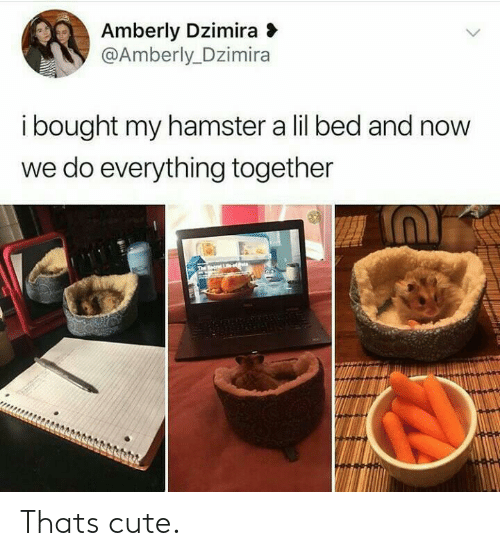 Cute, Hamster, and Now: Amberly Dzimira  @Amberly Dzimira  ibought my hamster a lil bed and now  we do everything together  The ecrt Le-et Thats cute.