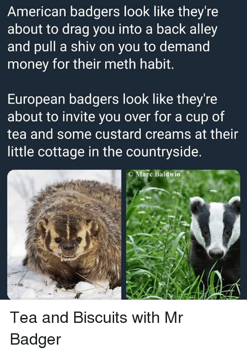 Money, American, and Back: American badgers look like they're  about to drag you into a back alley  and pull a shiv on you to demand  money for their meth habit.  European badgers look like they're  about to invite you over for a cup of  tea and some custard creams at their  little cottage in the countryside.  Marc Baldwin Tea and Biscuits with Mr Badger