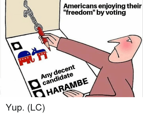 """Memes, Freedom, and Harambe: Americans enjoying their  """"freedom"""" by voting  Any decent  candidate  HARAMBE Yup. (LC)"""