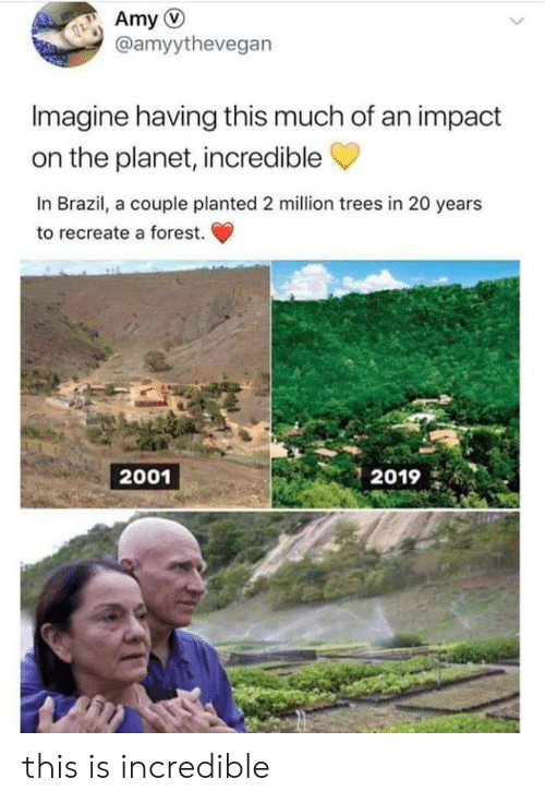 Brazil: Amy  @amyythevegan  Imagine having this much of an impact  on the planet, incredible  In Brazil, a couple planted 2 million trees in 20 years  to recreate a forest.  2001  2019 this is incredible