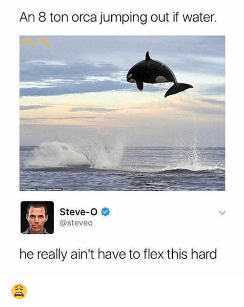 Flexing, Memes, and Water: An 8 ton orca jumping out if water  Steve-O  @steveo  he really ain't have to flex this hard 😩