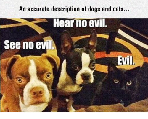 dog-and-cats: An accurate description of dogs and cats.  HearnoeviT.  See no e  vil