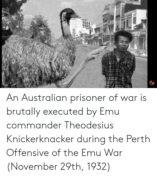 emu: An Australian prisoner of war is brutally executed by Emu commander Theodesius Knickerknacker during the Perth Offensive of the Emu War (November 29th, 1932)