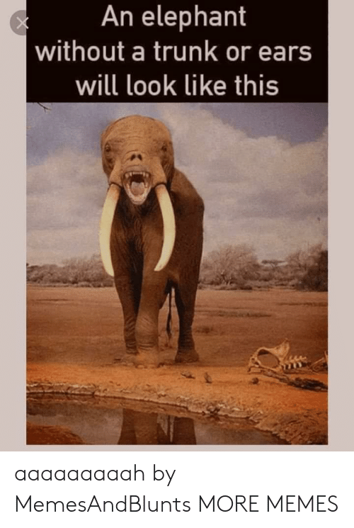 trunk: An elephant  without a trunk or ears  will look like this aaaaaaaaah by MemesAndBlunts MORE MEMES