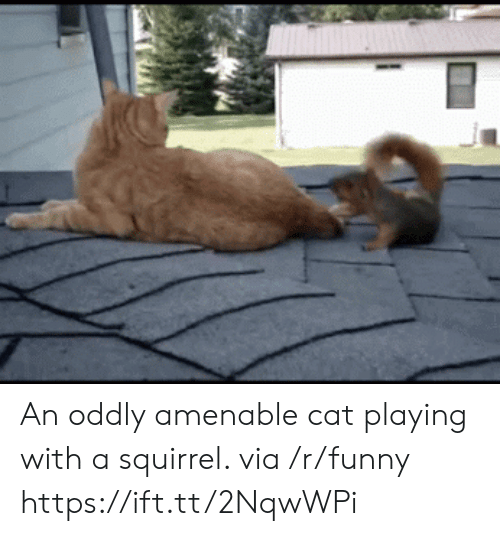 amenable: An oddly amenable cat playing with a squirrel. via /r/funny https://ift.tt/2NqwWPi