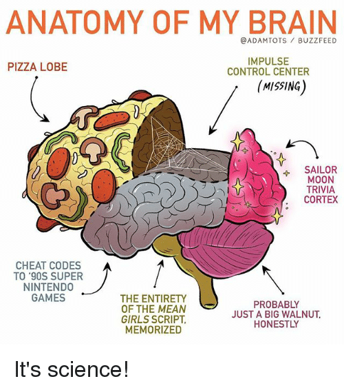 Mooned: ANATOMY OF MY BRAIN  @ADAMTOTS BUZZFEED  IMPULSE  CONTROL CENTER  PIZZA LOBE  MISSING)  SAILOR  MOON  TRIVIA  CORTEX  CHEAT CODES  TO '90S SUPER  NINTEND0  GAMES  THE ENTIRETY  OF THE MEAN  GIRLS SCRIPT  MEMORIZED  PROBABLY  JUST A BIG WALNUT  HONESTLY It's science!