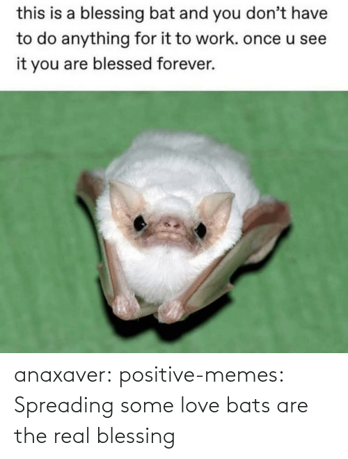 Love: anaxaver: positive-memes: Spreading some love bats are the real blessing