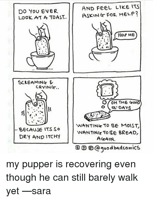 the good ol days: AND FEEL LIKE ITS  DO YOU EVER  HELP?  Look AT A TOAST.. ASKING FOR HELP ME  SCREAMING  CRYING  H THE GooD  OL DAYS  VNANTING TO BE MOIST  BECAUSE ITS So  WANTING TO BE BREAD  DRY AND ITCHY  AGAIN.  CO a good badcomics my pupper is recovering even though he can still barely walk yet —sara