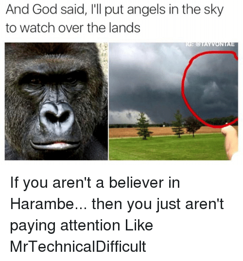 Dank, God, and Angel: And God said, l'll put angels in the sky  to watch over the lands If you aren't a believer in Harambe... then you just aren't paying attention  Like MrTechnicalDifficult