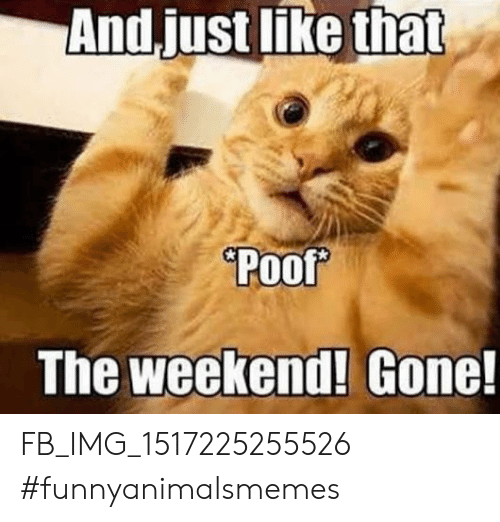 The Weekend, Weekend, and Gone: And.just like that  Poof  The weekend! Gone! FB_IMG_1517225255526 #funnyanimalsmemes