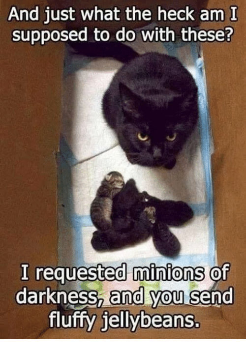 Supposibly: And just what the heck am I  supposed to do with these?  I requested minions of  darkness, and you send  fluffy jellybeans