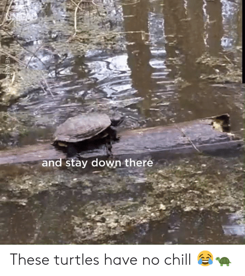 No chill: and stay down there  NEWSPLARE These turtles have no chill 😂🐢