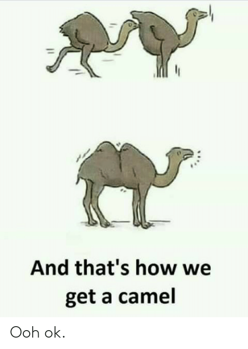 How, Camel, and Get: And that's how we  get a camel Ooh ok.