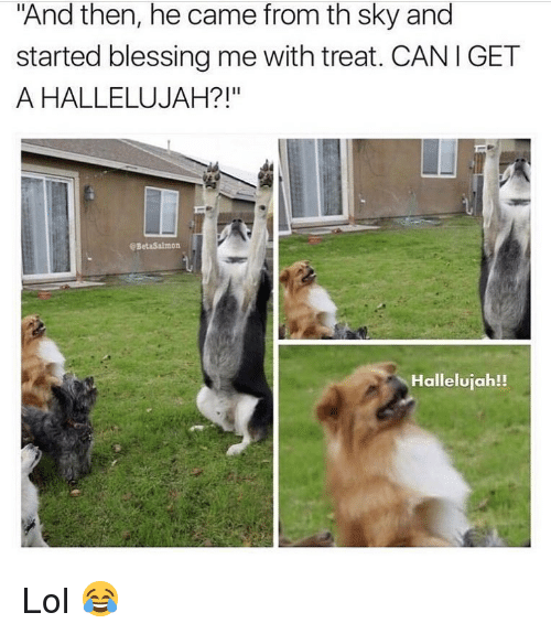 "Hallelujah, Lol, and Memes: ""And then, he came from th sky and  started blessing me with treat. CANIGET  A HALLELUJAH?!""  @BetaSalmon  Hallelujah!! Lol 😂"