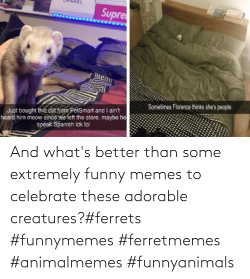 Adorable: And what's better than some extremely funny memes to celebrate these adorable creatures?#ferrets #funnymemes #ferretmemes #animalmemes #funnyanimals